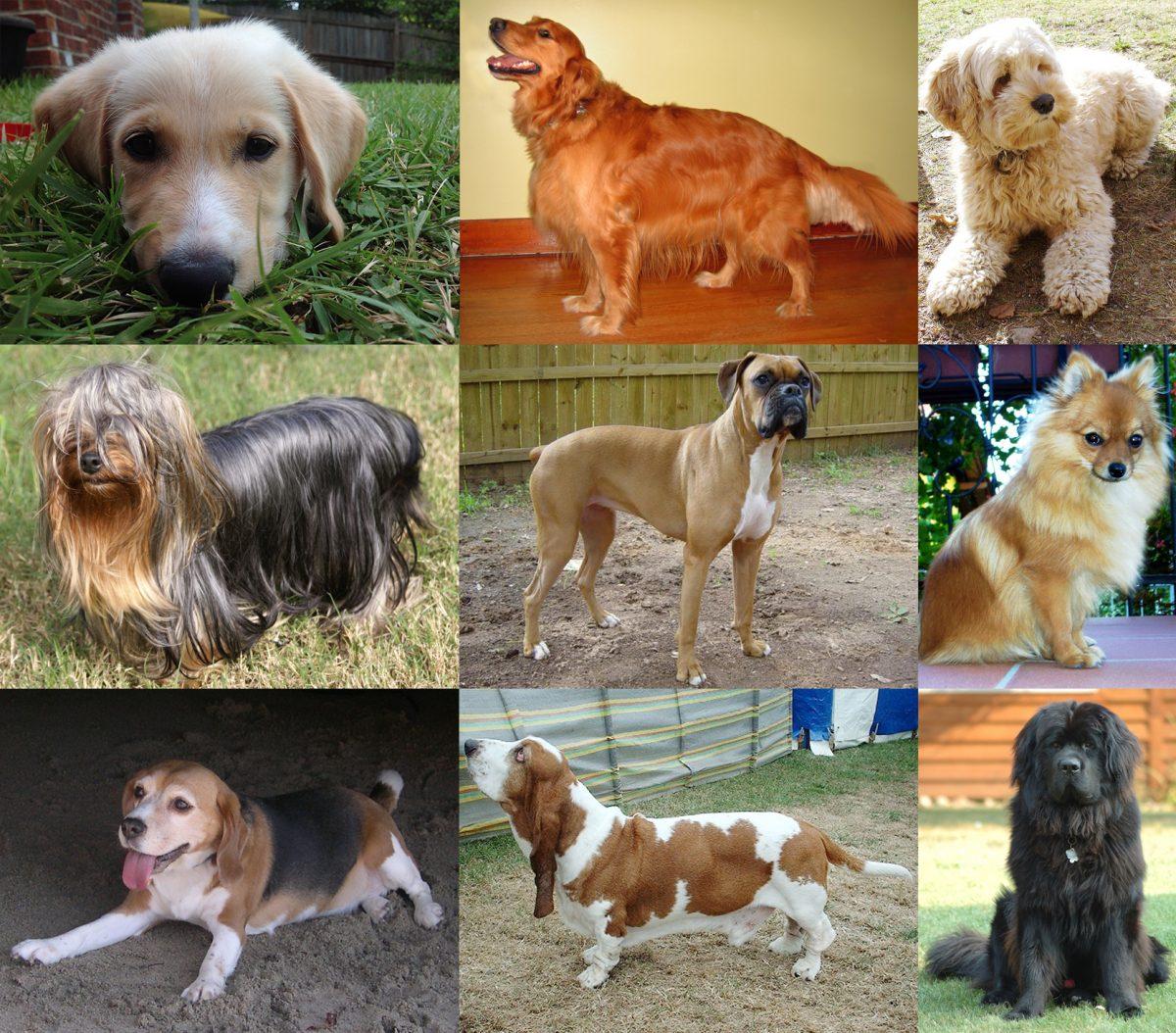 Membuka Usaha Menjadi Pelatih Anjing | Berita Bisnis ...